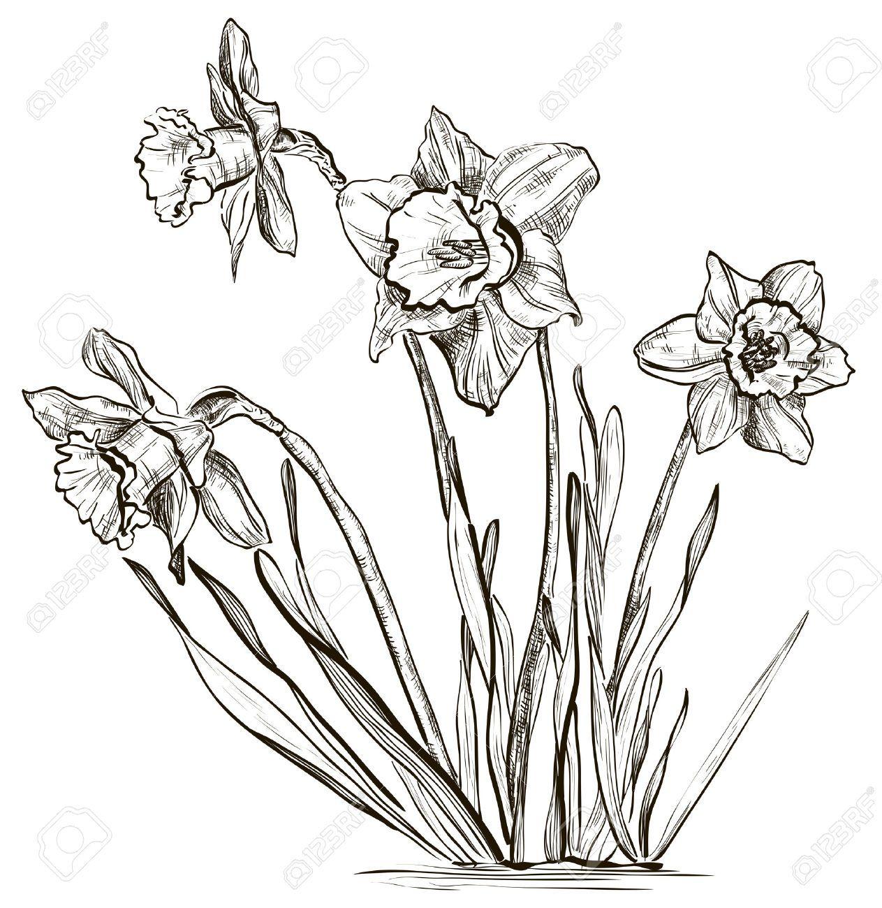 Pin by carla art on fiori foto dipinti disegni pinterest