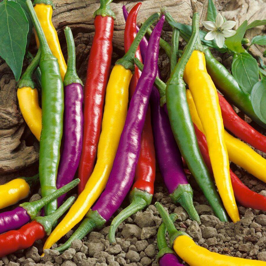 Rare Giant Spices green Spicy Chili Pepper Seeds Vegetable Plant 100Pcs