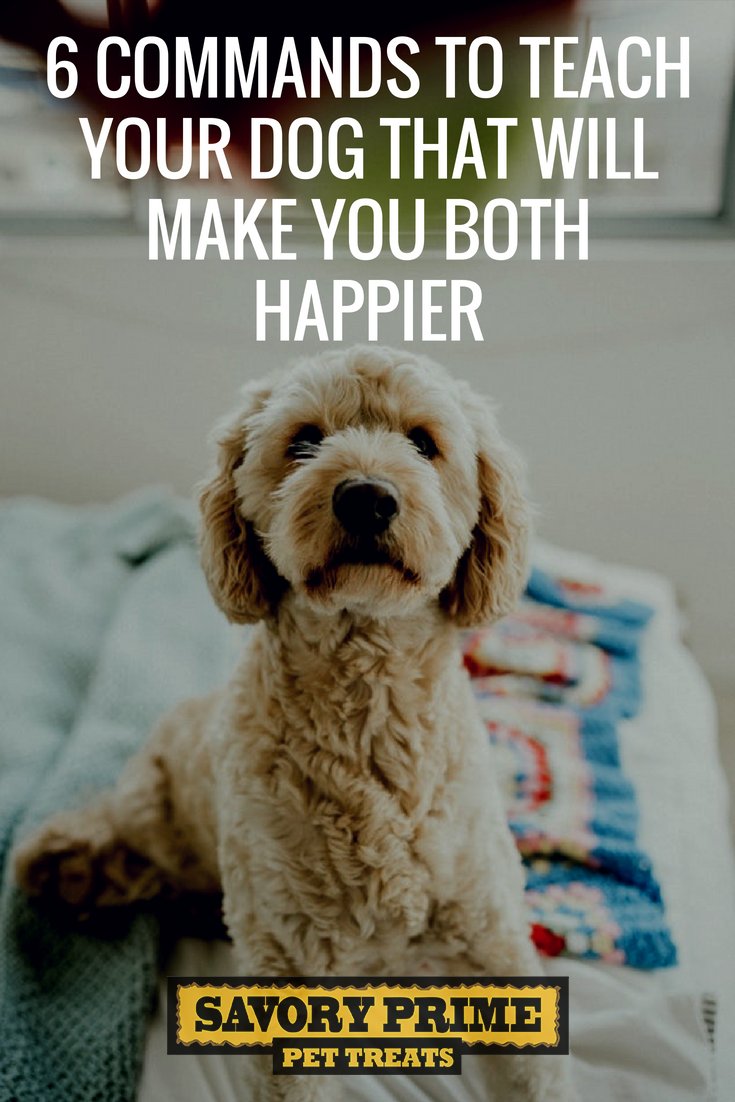 commands to teach your dog that will make you both happier