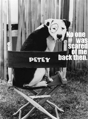Petey the beloved Pit Bull - dog from the Little Rascals TV show. Love Petey!!