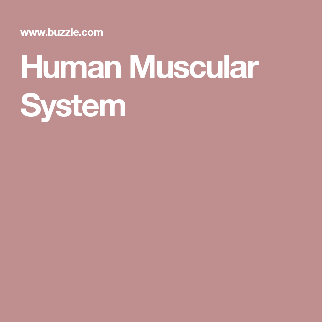 human muscular system | articles, muscular system and human, Muscles