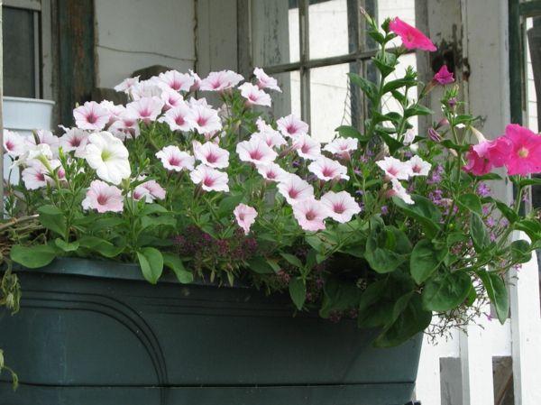 pflegeleichte balkonpflanzen den balkon leicht und schnell versch nern balkonpflanzen. Black Bedroom Furniture Sets. Home Design Ideas