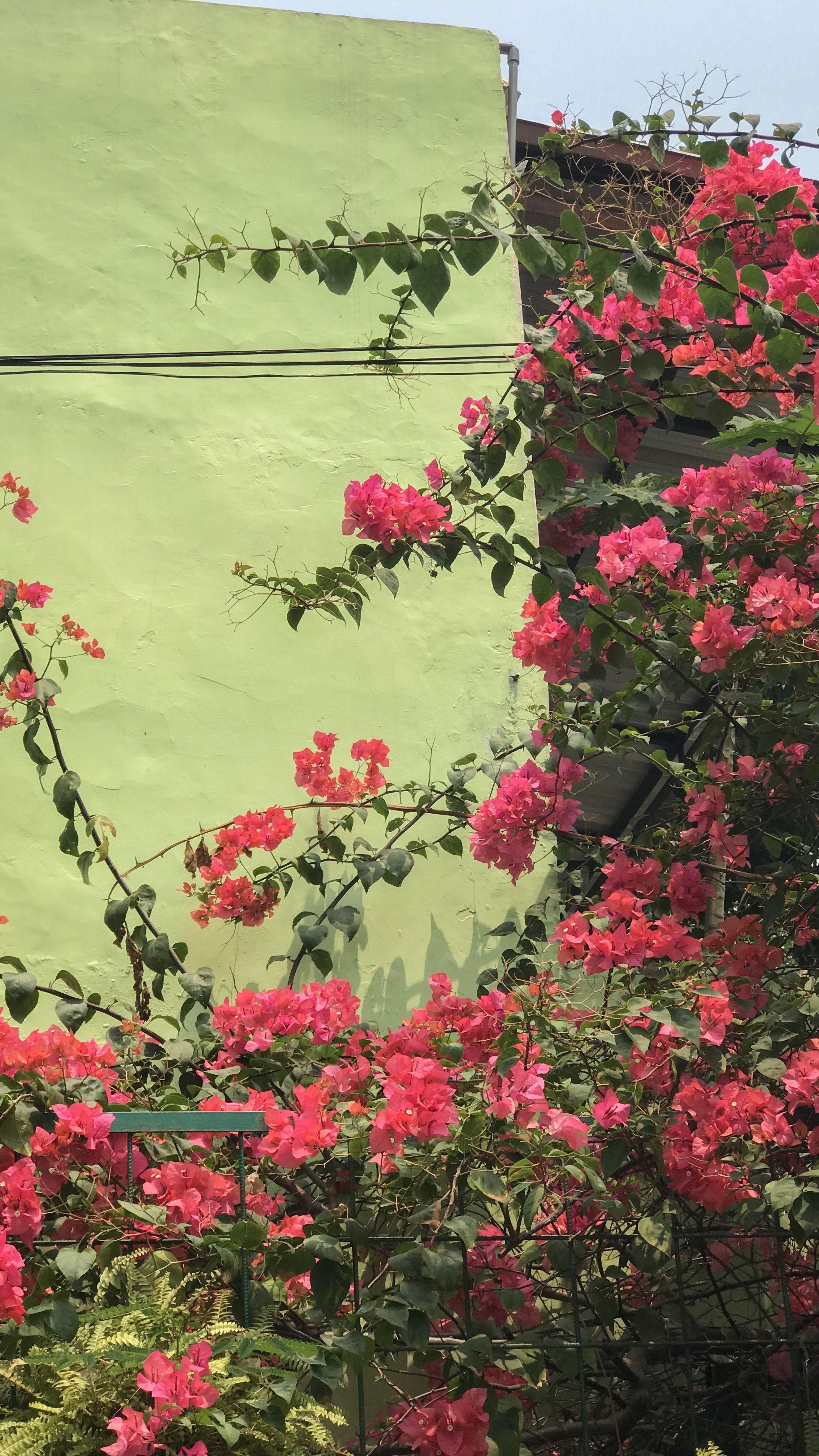 Bunga Di Gerbang Sekolah Bunga