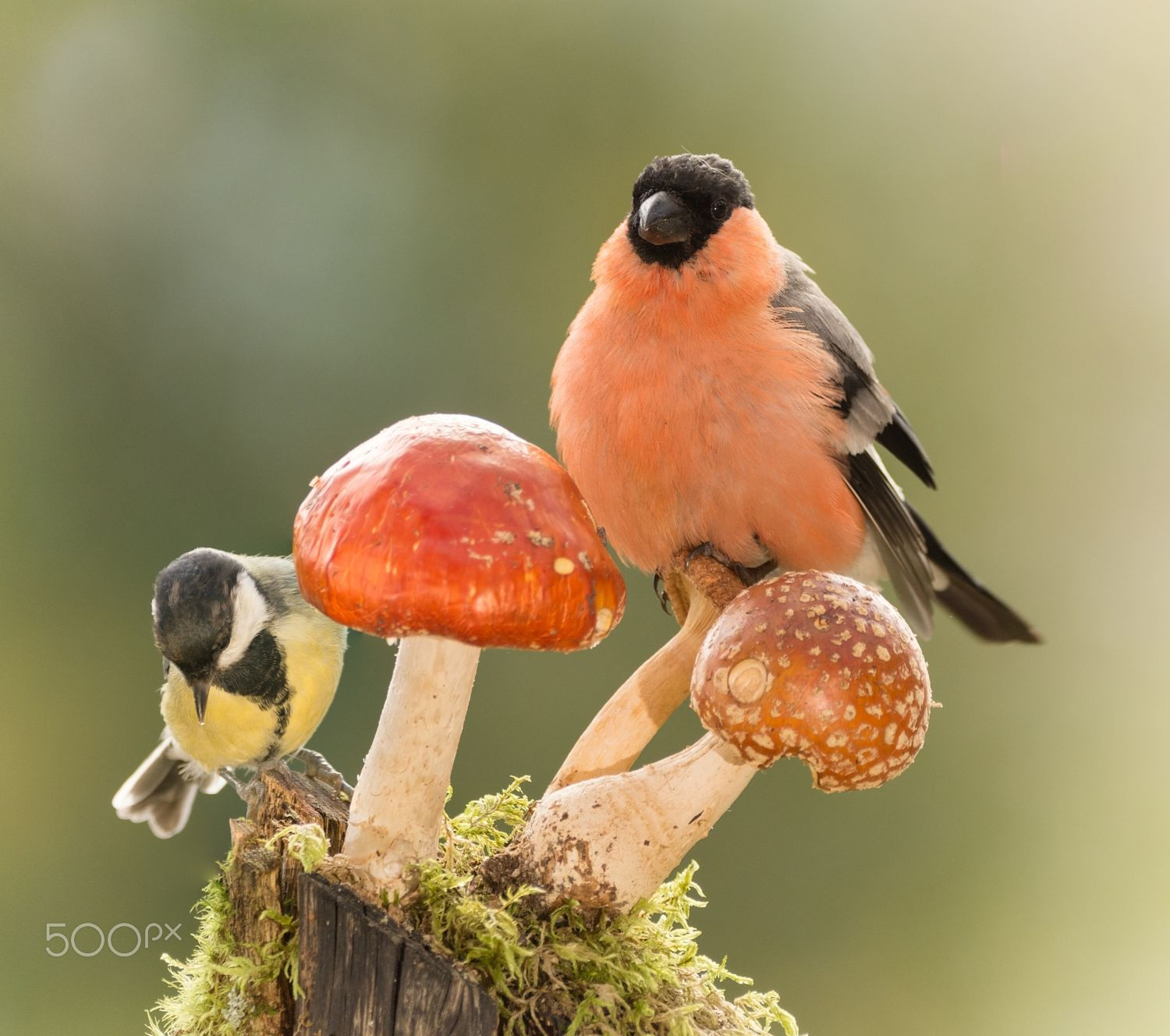 mushrooms match by Geert Weggen on 500px