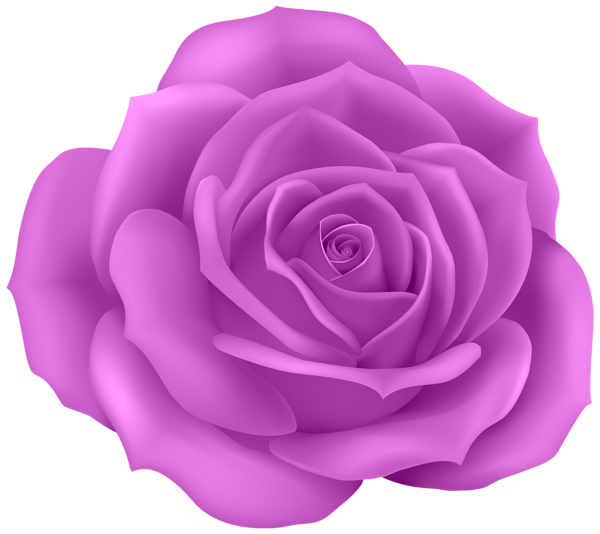 Rose Purple Clip Art Png Image Flower Background Iphone Flower Png Images Beautiful Flowers Images