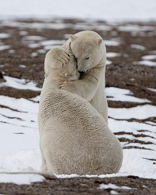 ANIMAL LOVE ON THE NORTH POLE ♥♥♥