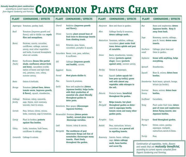 Companion Planting Chart  Organic Gardening Supplies
