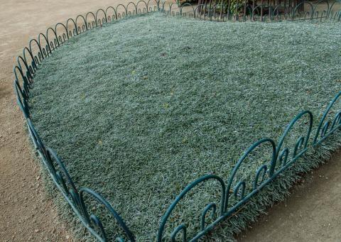Dymondia Margaretae Silver Carpet Landscaping