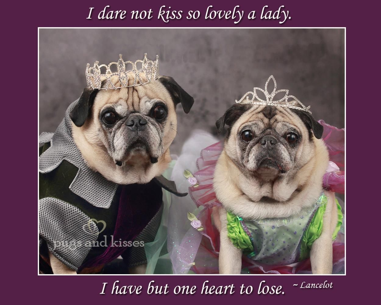 The King And His Queen Pugs In Costume Cute Animal Photos Pugs