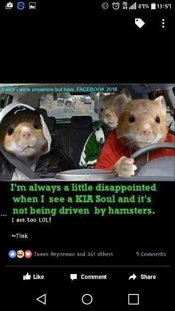 Kia Soul Animal Humor Funny Stuff Haha Cute Jokes Sayings Random