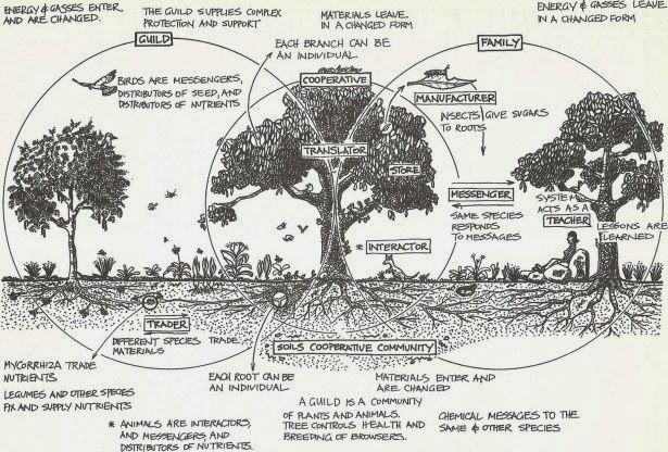 Mycogardening Amenager Une Foret Jardin Avec Des Champignons