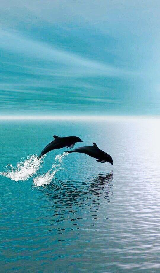 Delfine springen bei bedecktem Himmel.