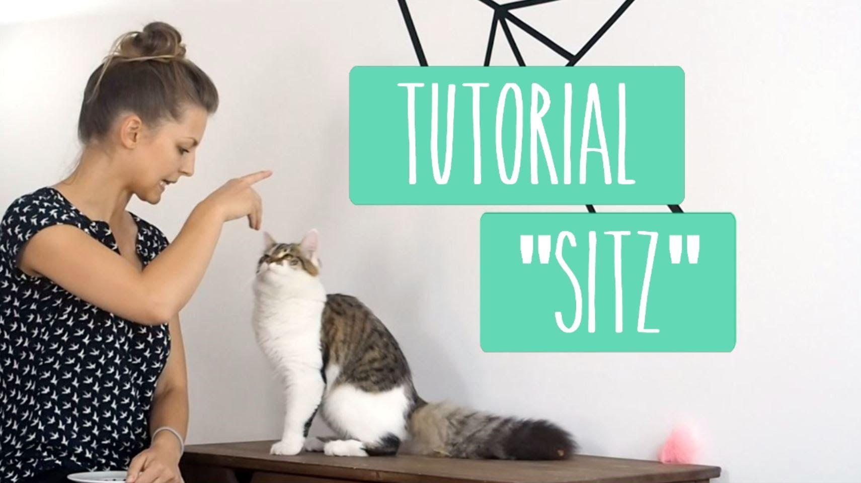 Katze Sitz beibringen - Tutorial mit Lotte | Clicker Tricks