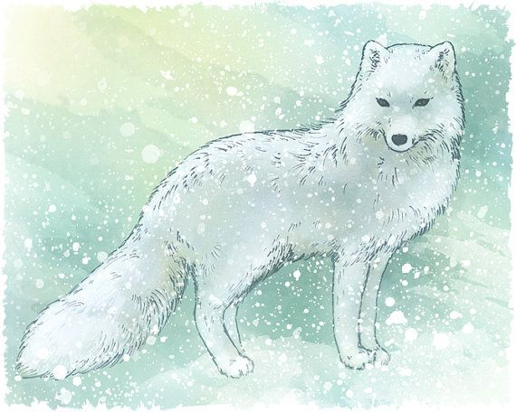 Snow Fox Arctic White Fox Wildlife Nature Art By Lapetitemascarade 24 00 Arctic Fox Art Fox Painting Fox Art