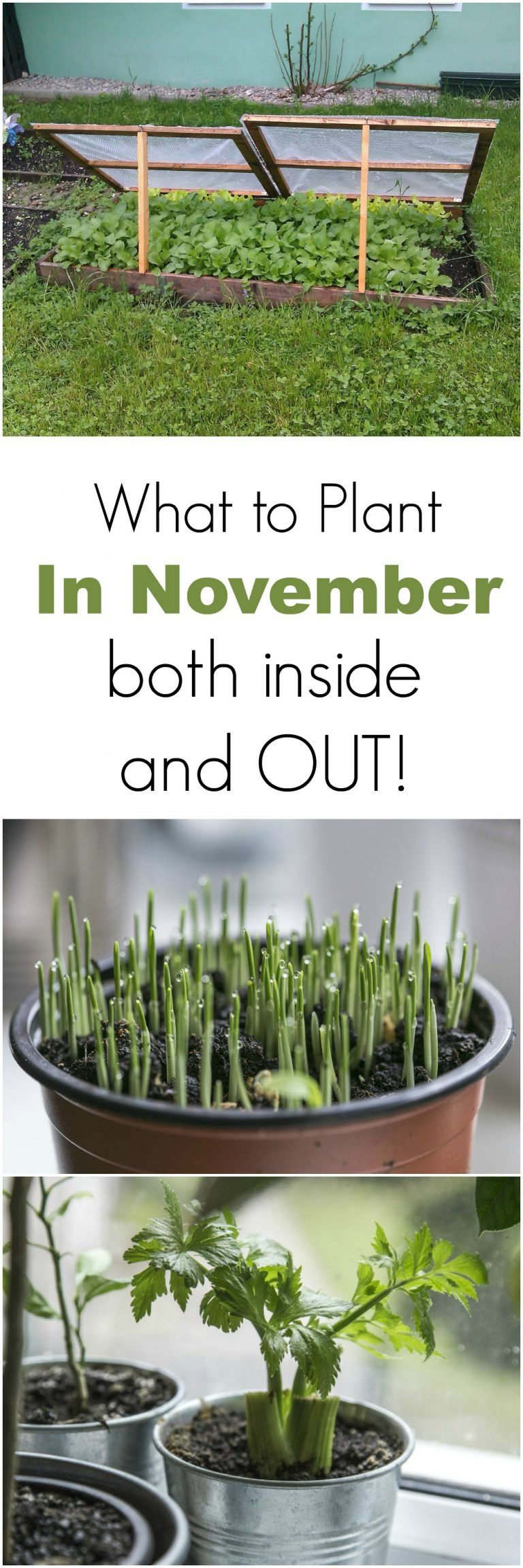 what to plant in november both inside and outside november
