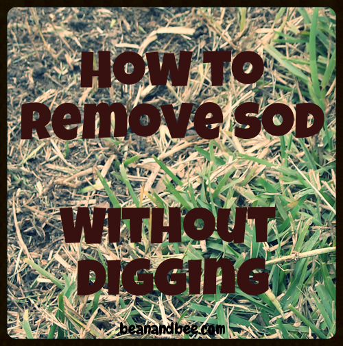 How To Remove Sod Without Digging Bean Bee Sod Compost Soil Sustainable Garden
