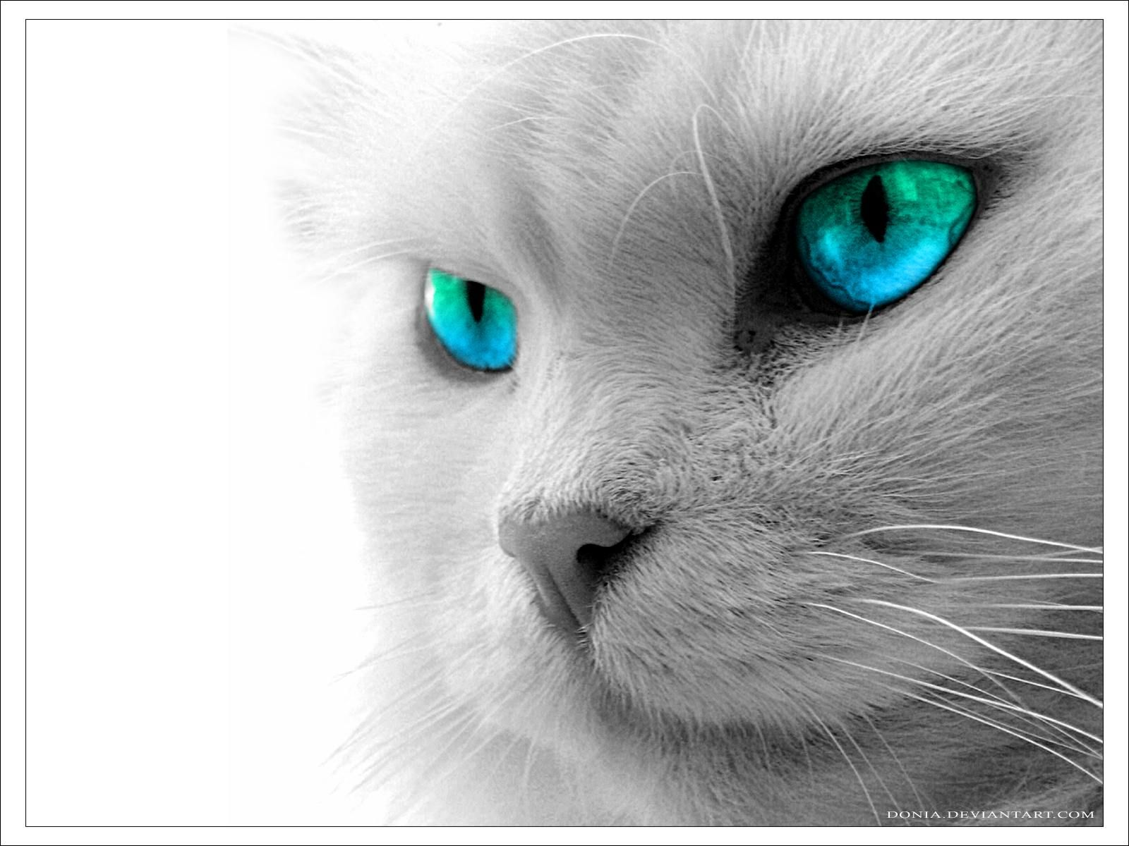 Blue Eyes Cat With Blue Eyes Grey Cats White Cats