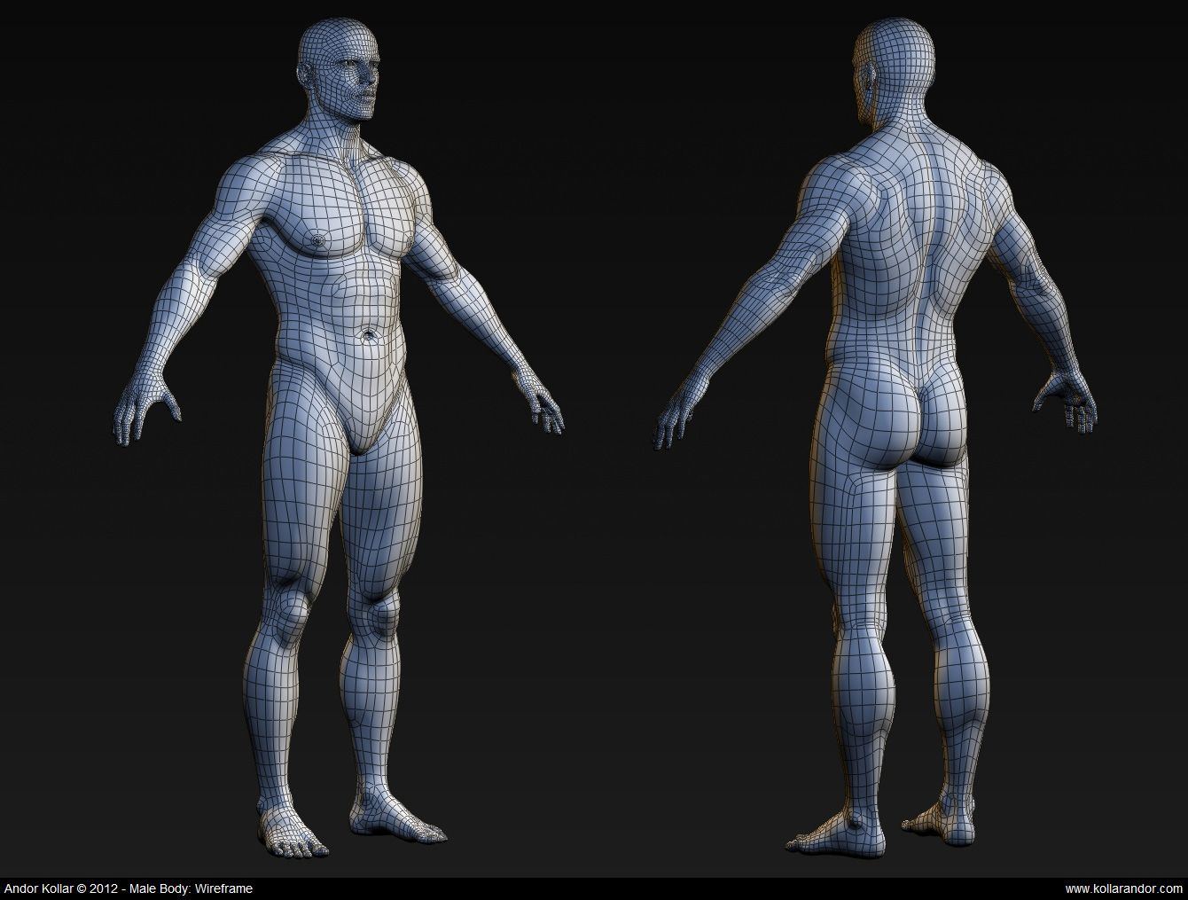 CGTalk - Body topology | Topology | Pinterest | Bodies, Anatomy and 3d