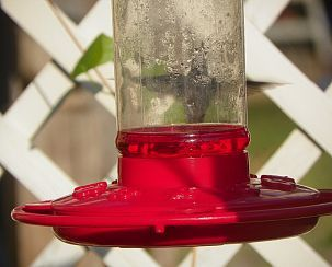 Can you see the Humming bird hiding from me? It's like he's playing peek a boo... I C an ant or 2 on the also..:(