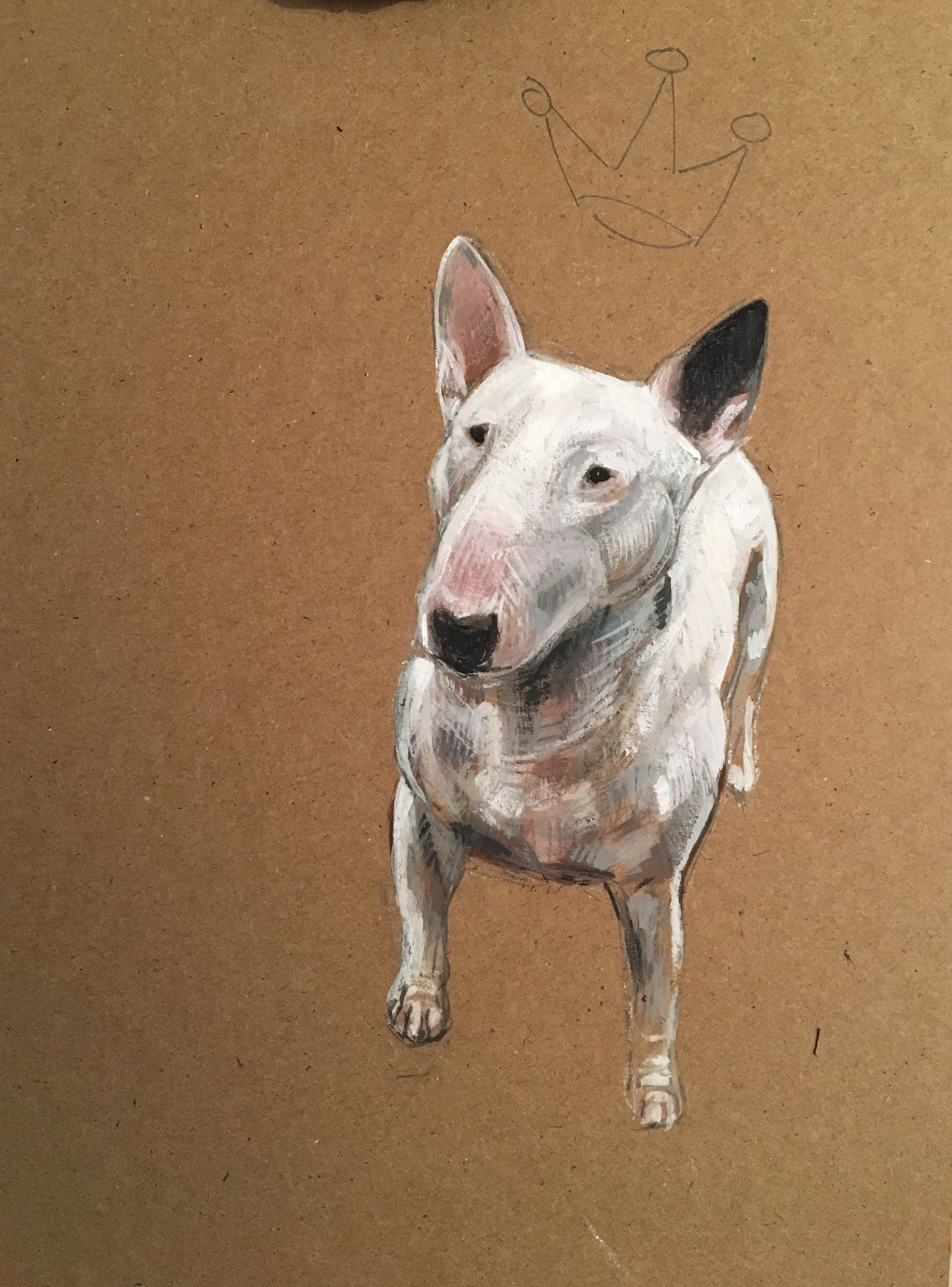 Bull Terrier Uses Having fun with...