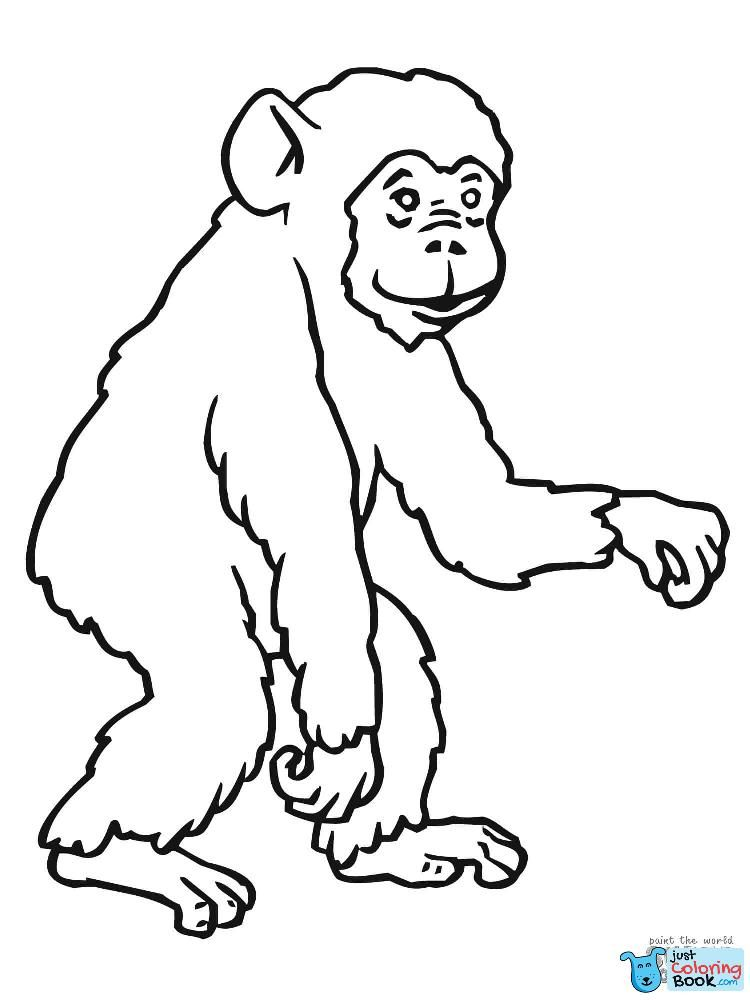 Pin Di Gorilla Coloring Pages