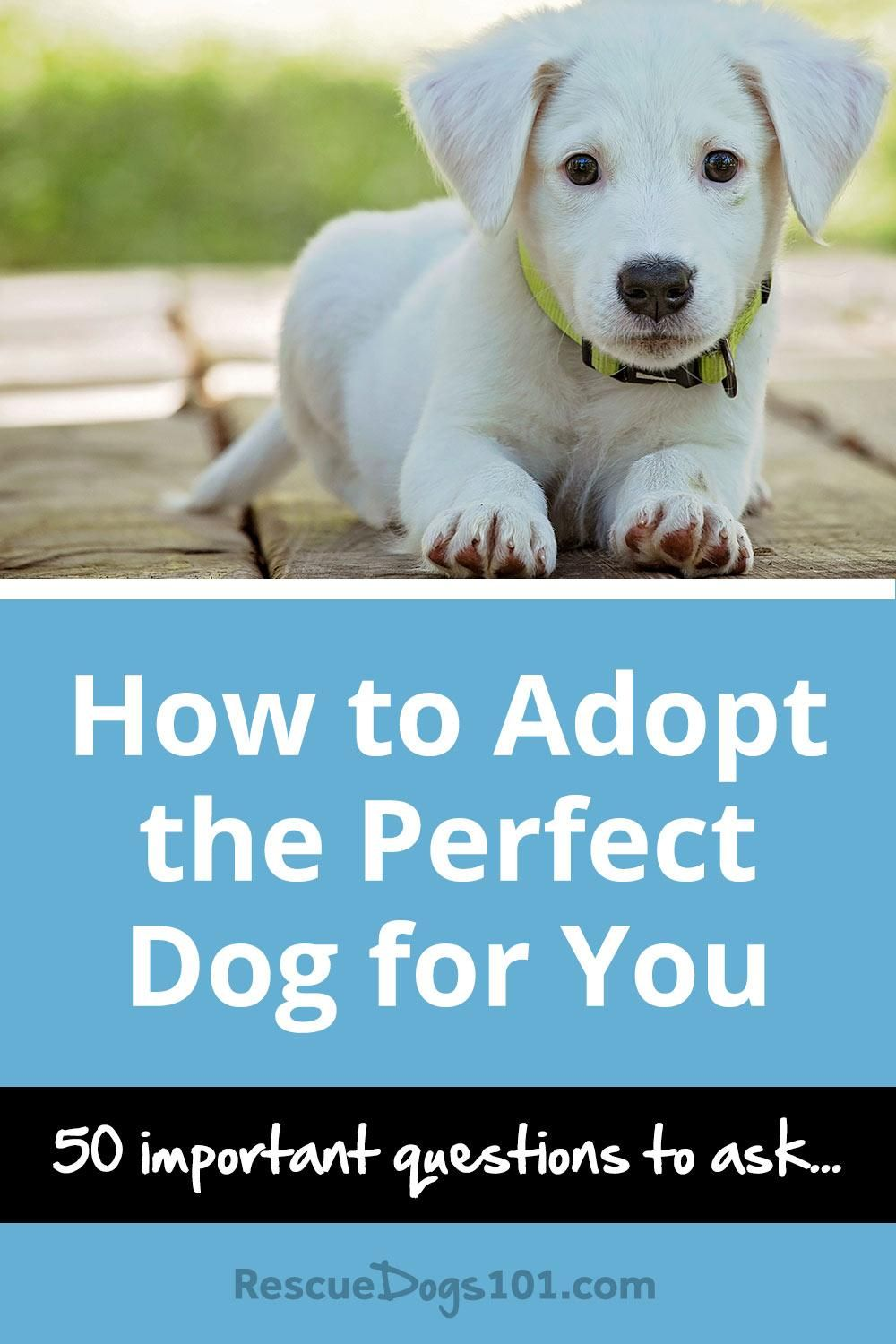 Adopting the Perfect Pet advise