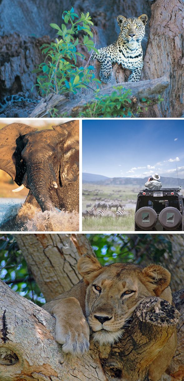 The ultimate would be to go on an African Safari....Simply beautiful!....