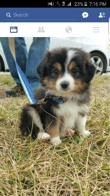 This Is The Cutest Dog I Have Ever Seen Animals Mostly