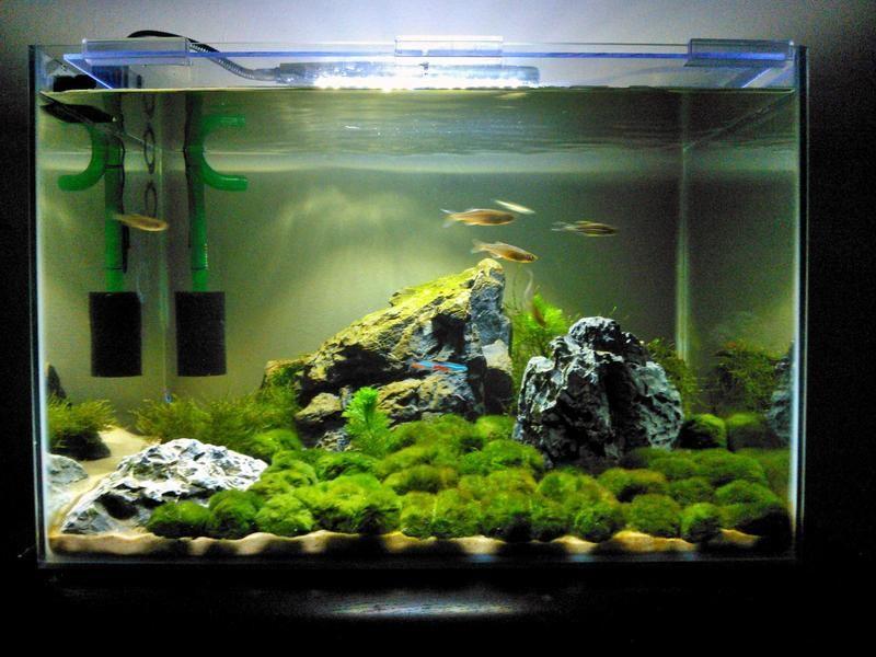 Community Aquarium Maintenance Log Aquarium Manager Bettafish Aquarium Fish Fishtank Tropicalfish Freshwater Bo Aquarium Maintenance Aquarium Fish Tank