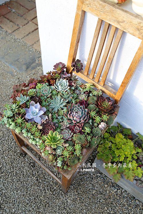 多肉succulent小品 盆景藝術 Stuhl Bepflanzen Pinterest