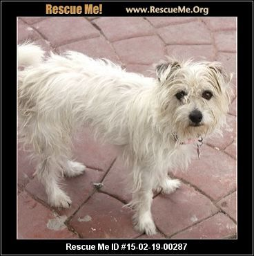 Rescue Me Id 15 02 19 00287darla Female Maltese Mix Age Young Adult Compatibility Good With Most Dogs Good With K Dogs And Kids Maltese Young Adult