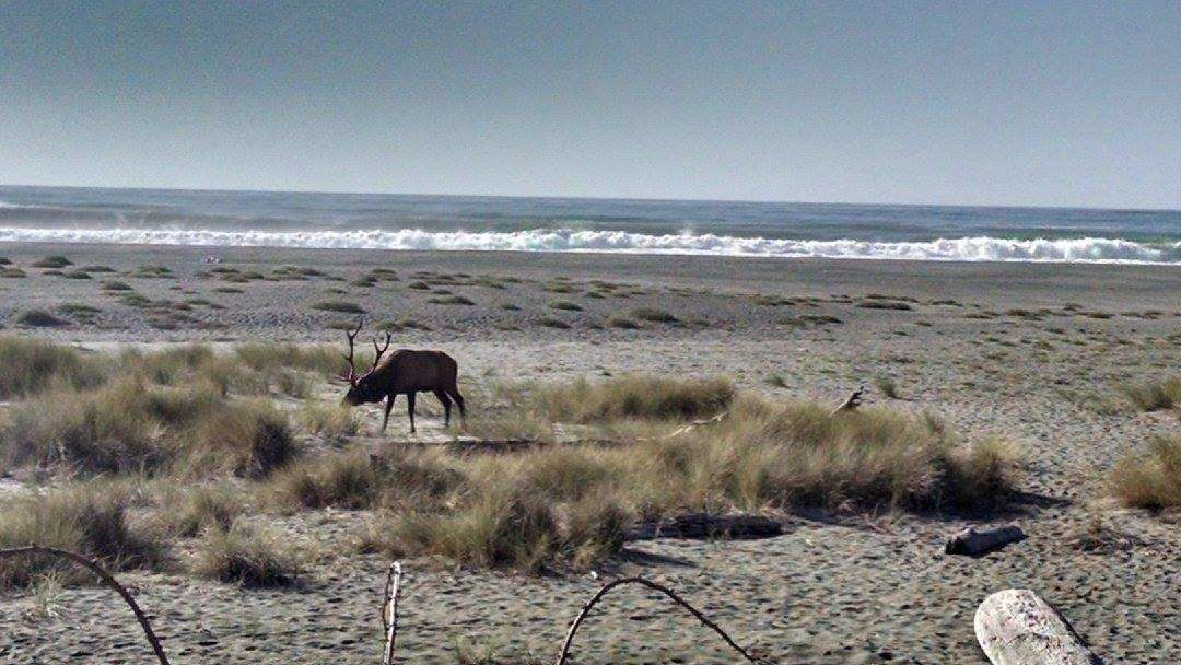Gold Bluffs Beach Campground In Prairie Creek Redwoods California Is Located Next To The Sand Dunes Literally Only A Few