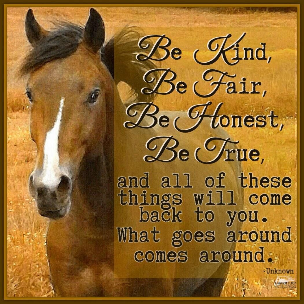 Be Kind Fair Honest and True | Inspirational Words | Horse ...