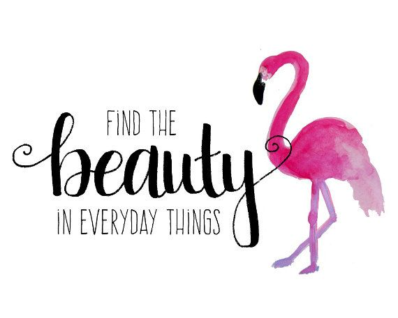 Flamingo Print Girl Quotes Find The Beauty Pink By