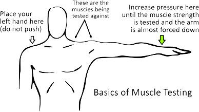 Lied Kinesiology Muscle Testing How It Works