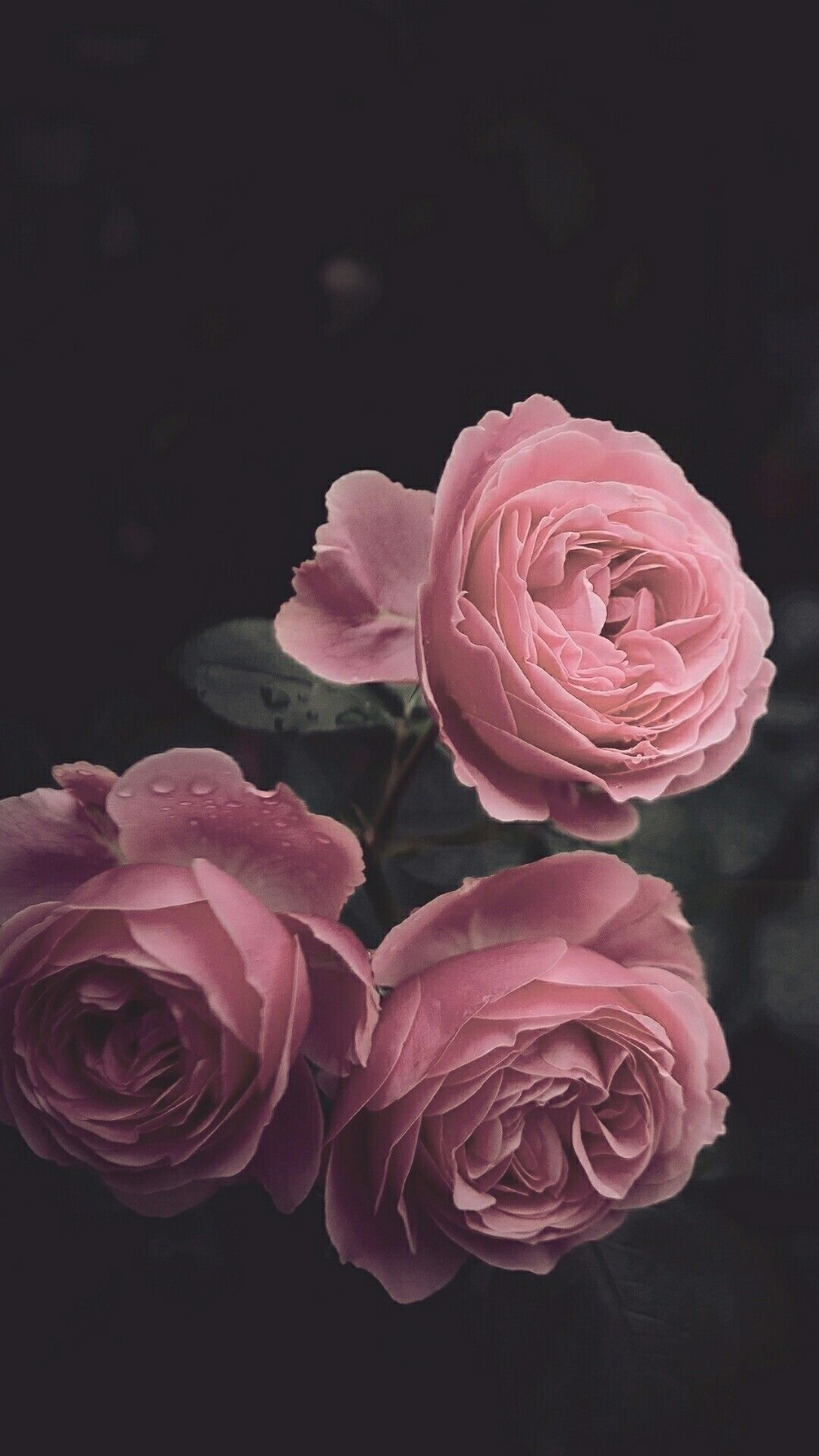 #Dark iPhone wallpaper #darkiphonewallpaper #Dark iPhone wallpaper #rosesaesthetic