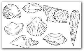 Resultado De Imagen Para Caracol De Mar Dibujo Mar Para Colorear Caracol De Mar Dibujo Conchas De Mar Dibujo