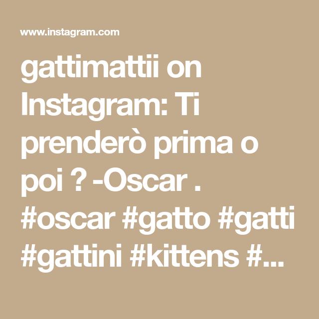 gattimattii on Instagram: Ti prenderò prima o poi 😼 -Oscar . #oscar #gatto #gatti #gattini #kittens #cutekitten #instacat #instakitten #instadaily #instagatti…
