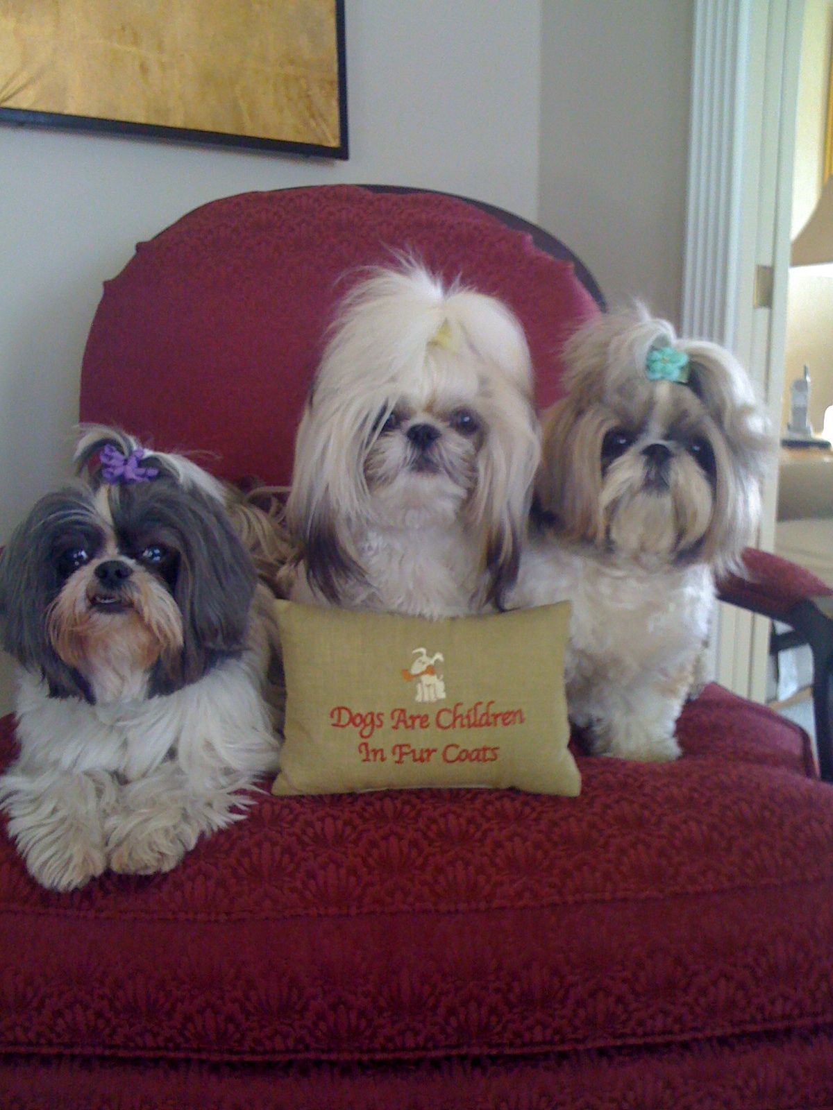 Om This Is My Mom Dogs Are Children In Fur Coats Shih Tzu