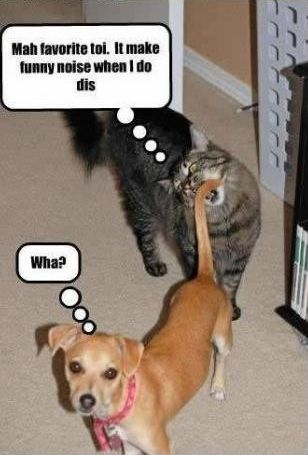 Doggie Funnies And Some Cat Stuff Too Funny Dog Captions