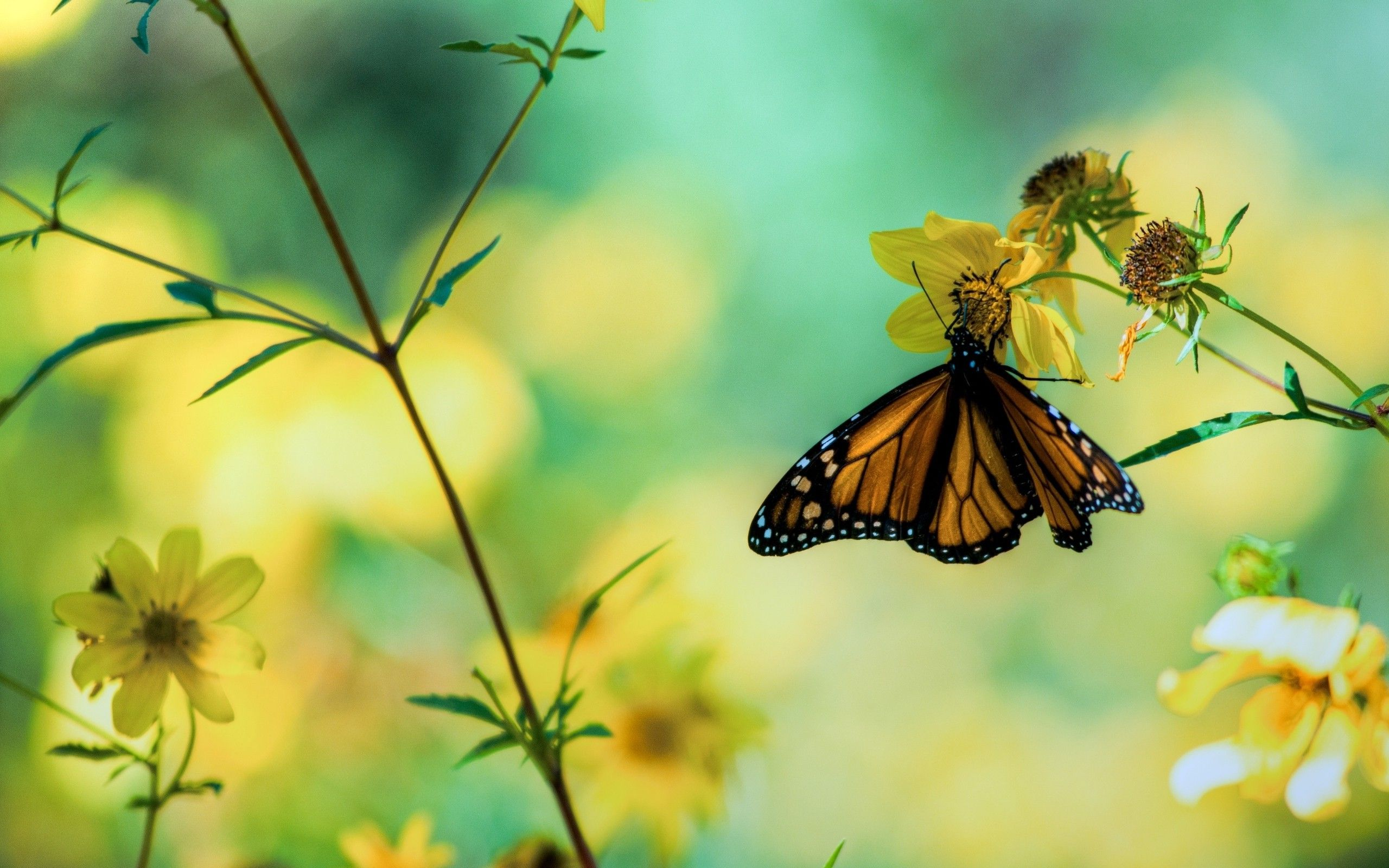 beautiful butterfly perched on flower wallpaper background wallpaper