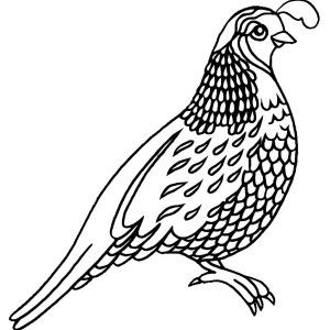 Free Coloring Pages Quail Background
