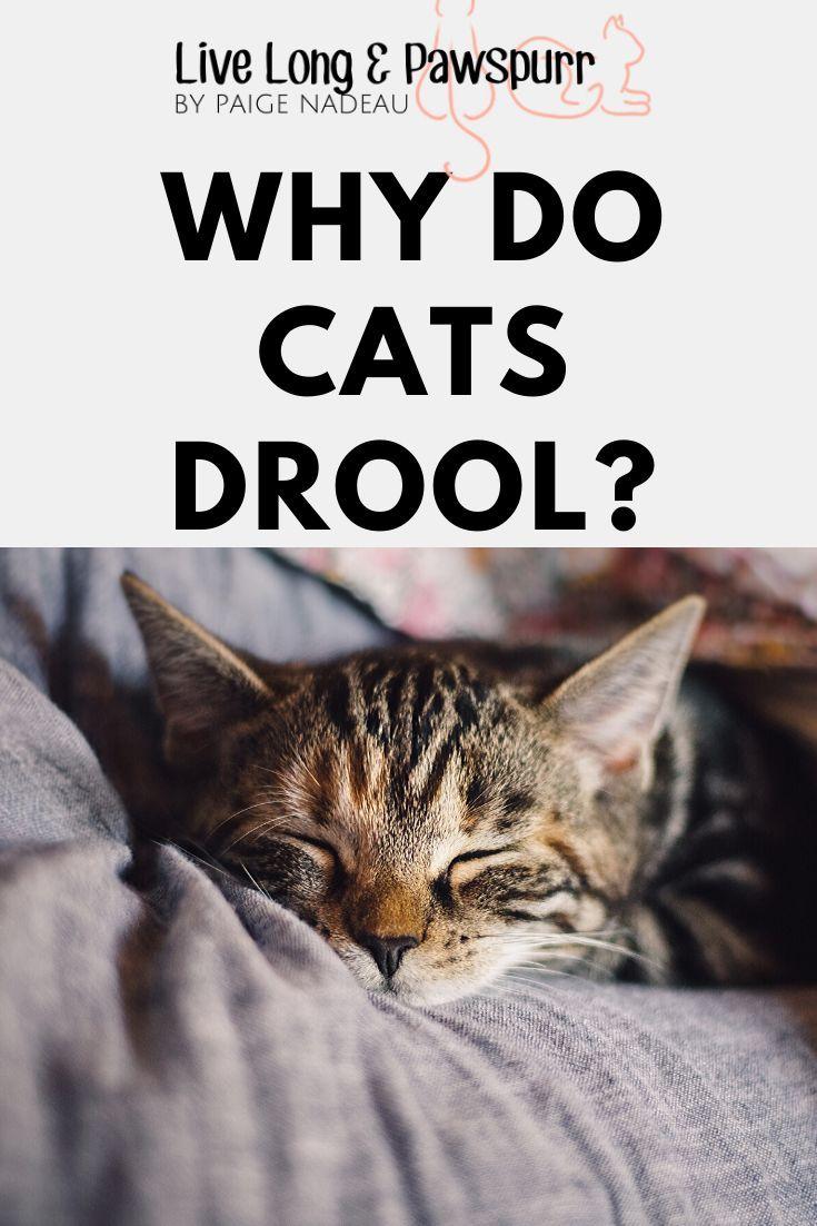 Why Does My Cat Drool? Cat drooling, Cat behavior, Cat