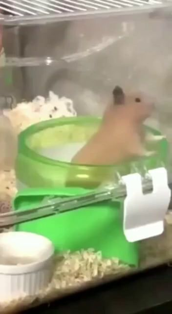This is a mad world Funny animals, Cute hamsters, Cute