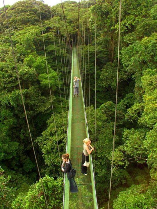 Canopy Walk above the rain forest in Costa Rica & Canopy walkways Costa Rica :) | Letu0027s travel the world together ...