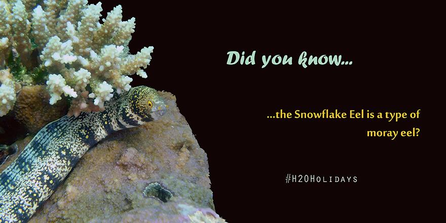 Snowflake Eel Snowflakes Did You Know Moray Eel
