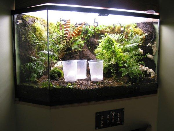 How To Remove Unwanted Tiny Insects From A Vivarium
