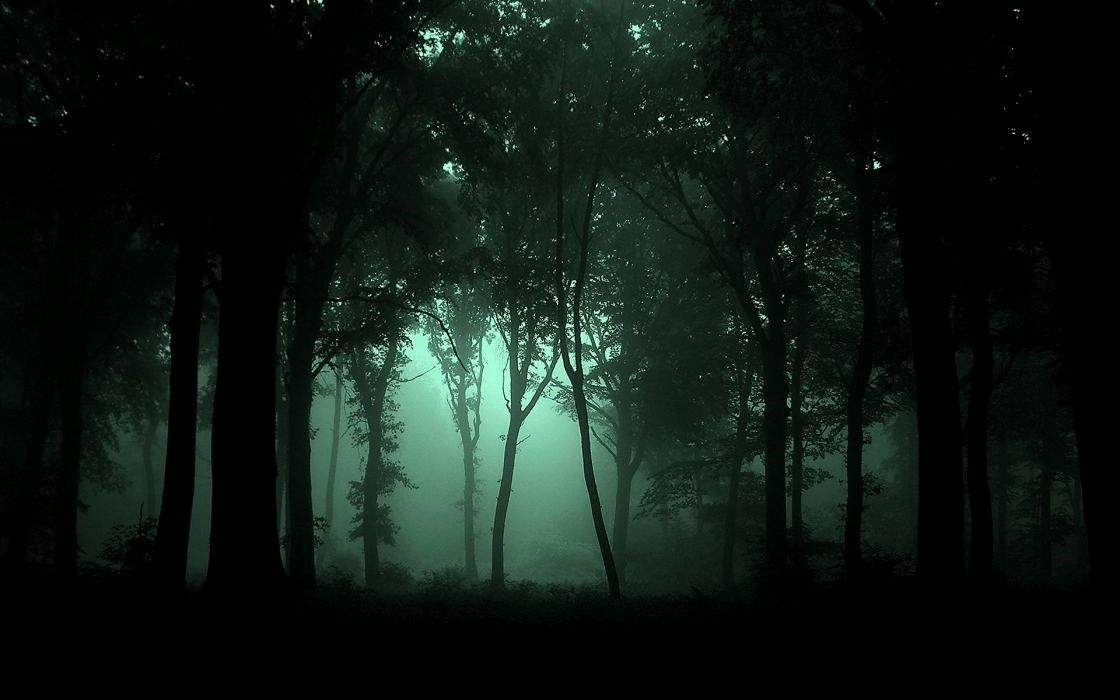 4k Wallpaper Nature Dark Ideas Foggy Forest Forest Photos Dark Forest