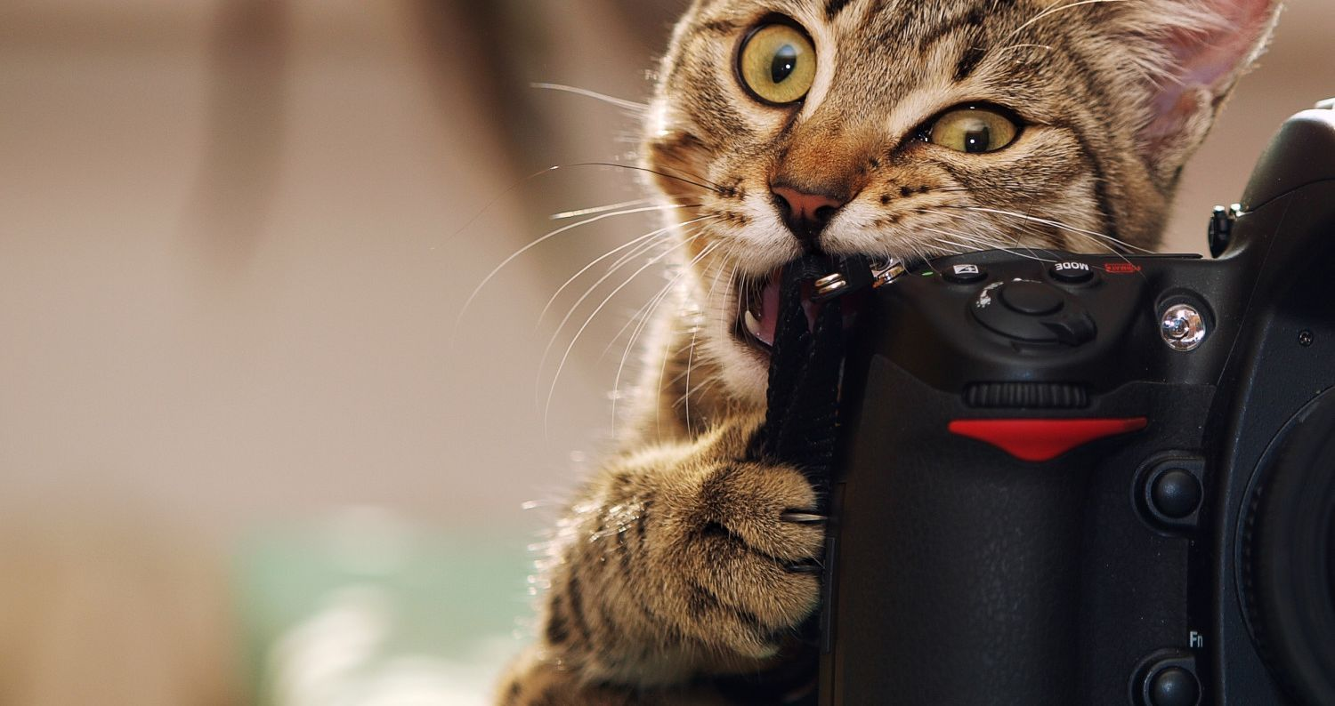 15 Cats Caught In The Middle Of A WTF Life Moment Cat