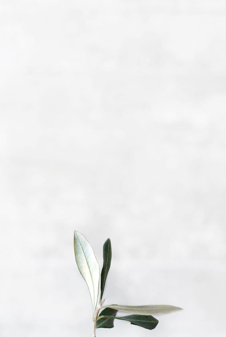 white ● minimalism ● inspiration ● pinned by /birambi_/